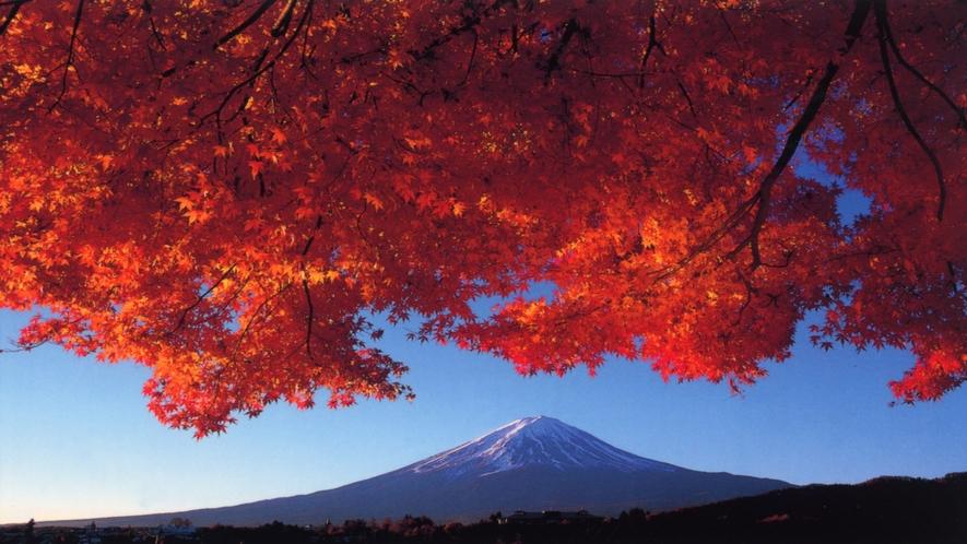 ■富士山と紅葉(河口湖畔もみじトンネル)<秋>(写真提供:富士河口湖 観光課)