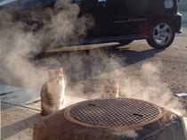 猫と湯けむり