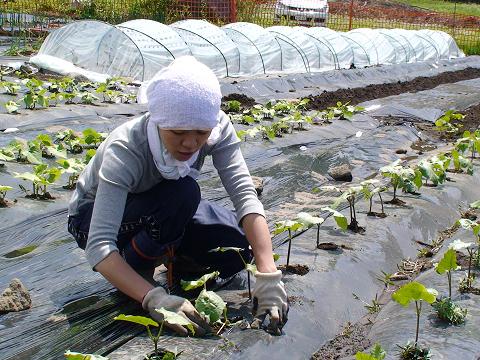 野菜作りに励むスタッフ
