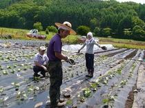 澤右衛門自家農園で働くスタッフ