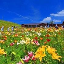 夏の箱館山でハイキング