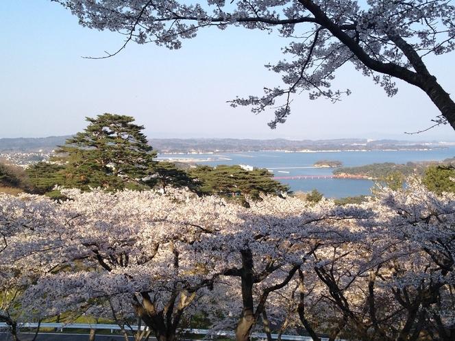 桜 西行戻しの松 公園