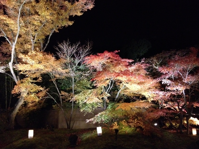 秋 松島円通院 紅葉ライトアップ