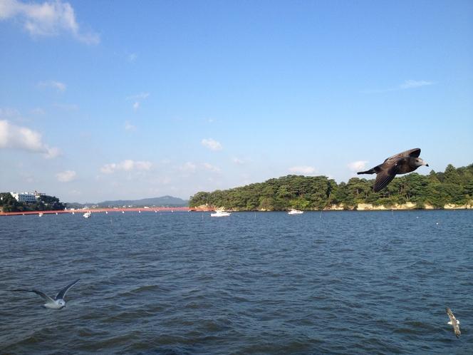 松島 観光船