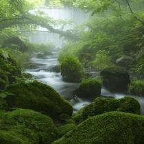 木谷沢渓流。日本のおいしい水の故郷の一つ奥大山。