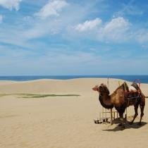 ぜひラクダに会いに鳥取砂丘に訪れてください。