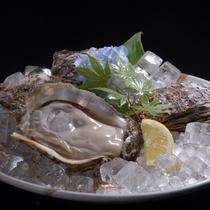 鳥取県産ブランド岩牡蠣『夏輝』