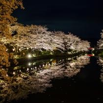 【鹿野城の夜桜】水面に映り込む桜が絶景。お車で約45分