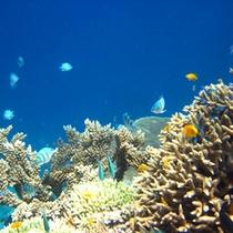 *【海中の風景】南国ならではのお魚の姿をご覧頂けます♪