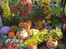ハロウインの飾りは秋の収穫祭と重なり、八ヶ岳の風物詩です。
