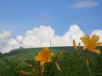 百合と雲 7月の風景です。ここは日本じゃないみたい・・・