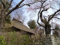高森御堂と枝垂れ桜 近くの里にあります。春はほんとに渋い桜の多いところです。