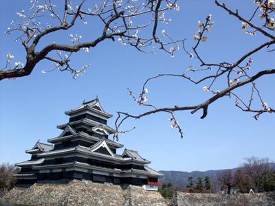国宝松本城と梅の花