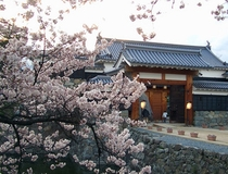 国宝 松本城「桜」