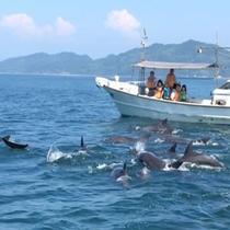 目の前で泳ぐ野性のイルカに大興奮!
