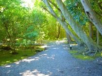 リスも訪れる竹の小径
