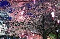 飛鳥山公園の桜③