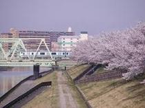 北区荒川の桜①