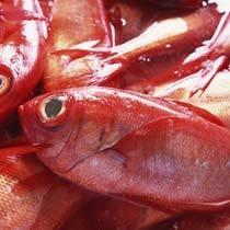 近海産の金目鯛♪