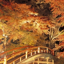 紅葉の名所「かじか橋」ライトアップ (当館より石段街経由で徒歩約20分)