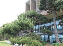 何十年もの間、日本海の潮風に耐え、成長し続けている風情ある個性豊かな松☆是非ご鑑賞下さい☆