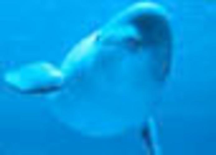 白イルカで大人気のアクアス(観光スポット)