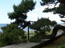 風情ある数々の松のうち、特にスタッフいちおしはこの見事な曲がりくねりの松です。