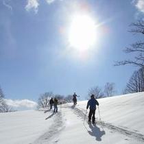 真っ白な雪に覆われた静かな森の中を歩いてみませんか?ネイチャーハイキングも人気(ツアー料金別途)