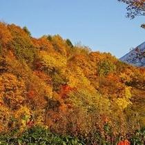 ◆秋のニセコは紅葉が楽しめます