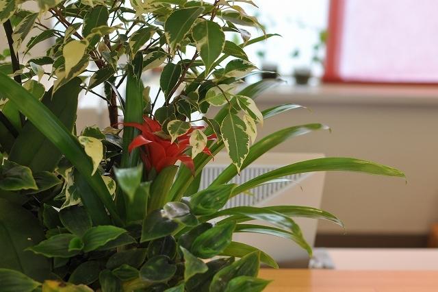 フロント観葉植物