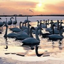 ◆ウトナイ湖