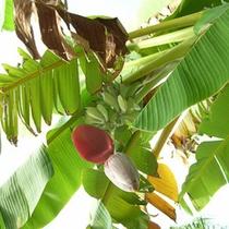 *〜ホテル周辺・南国の風景〜沖縄ならではの植物をお楽しみ下さい。