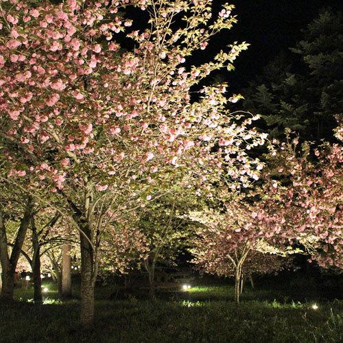 通り抜けの桜ライトアップ(4月中旬〜下旬)※天候や気温により前後します)