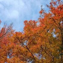 セラヴィの敷地内の紅葉(11月中旬頃の様子)
