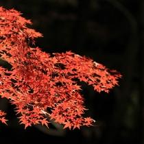 月の石もみじ公園の紅葉(11月中旬~下旬)※お車で約15分