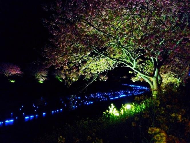 南伊豆、夜桜