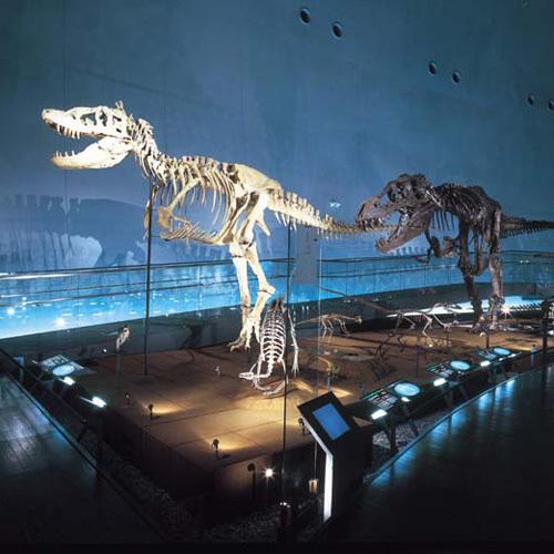 【恐竜博物館】千数百点もの標本や巨大復元ジオラマに興奮しそう!?福井恐竜博物館