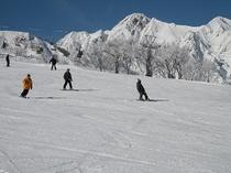 ウィンタースポーツ 006 スキー・八方