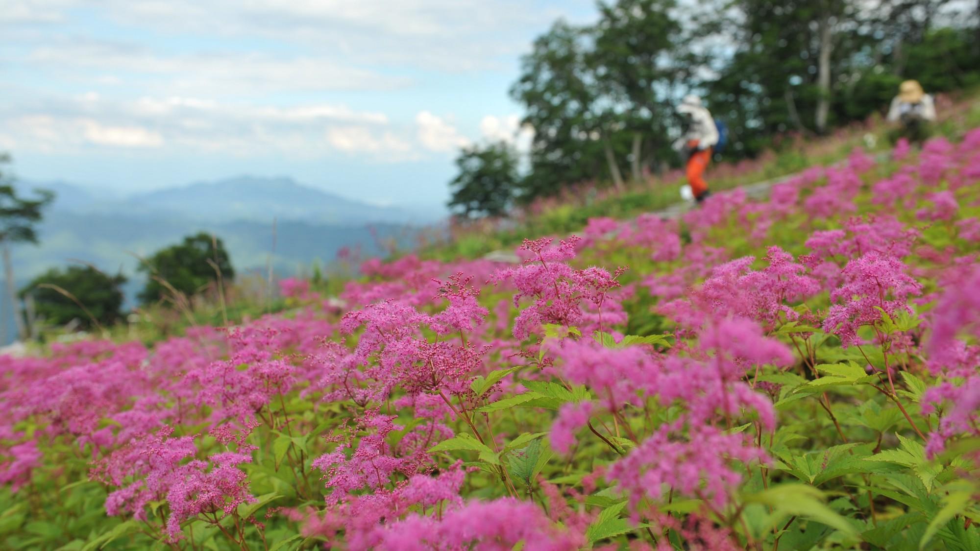 五竜高山植物園周辺