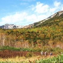 【秋】栂池自然園三段紅葉を楽しめます(ゴンドラまで車20分)割引券あり・部分送迎有