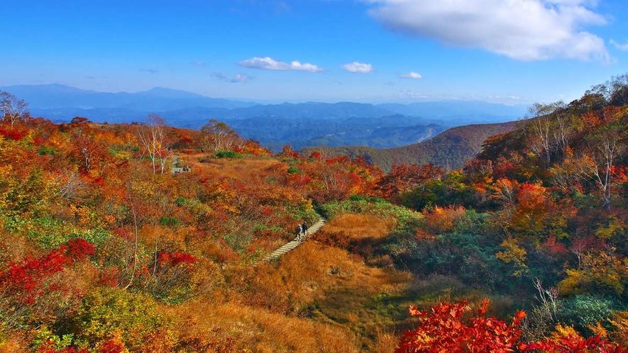 【秋】名もなき場所で。紅葉とアルプスと青空、どこもが絵になる白馬村(峰方付近・車10分)10月下