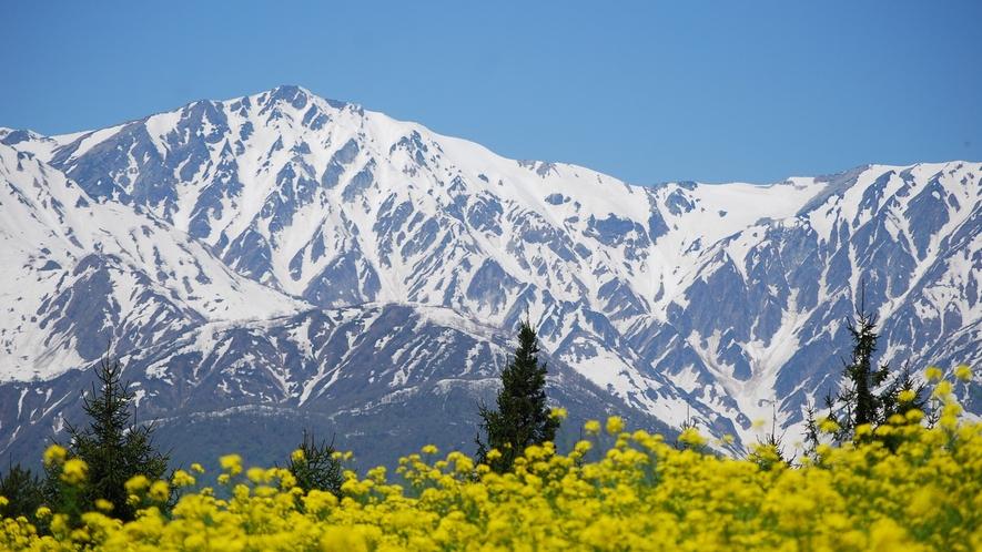 【春】6月頃までは充分に白い雪の山が楽しめる白馬(写真は5月上旬)