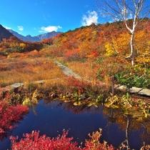 【秋】五竜高山植物園の奥の紅葉はあっぱれもの(ゴンドラまで車15分)割引券あり、10月上旬