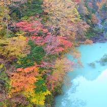 【秋】車を道路に一時停車して楽しむ圧巻の紅葉・高瀬渓谷(ホテルから車25分)見ごろ10月中下旬