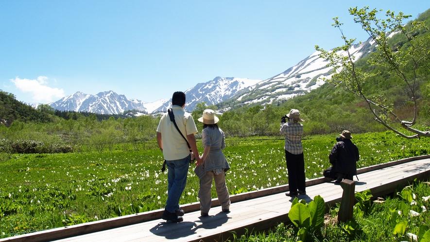 【栂池自然園】道を歩けば、数えあげればきりがないほどの花々が迎えてくれます。