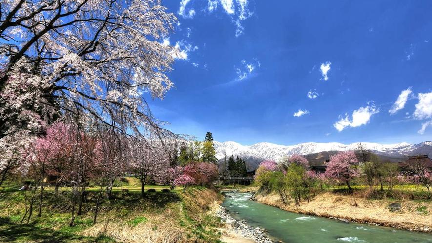 【春】最近有名になってきた「大出の吊橋」車3分、歩なら20分。桜も〇ですが、晴れたら山の景色が◎◎