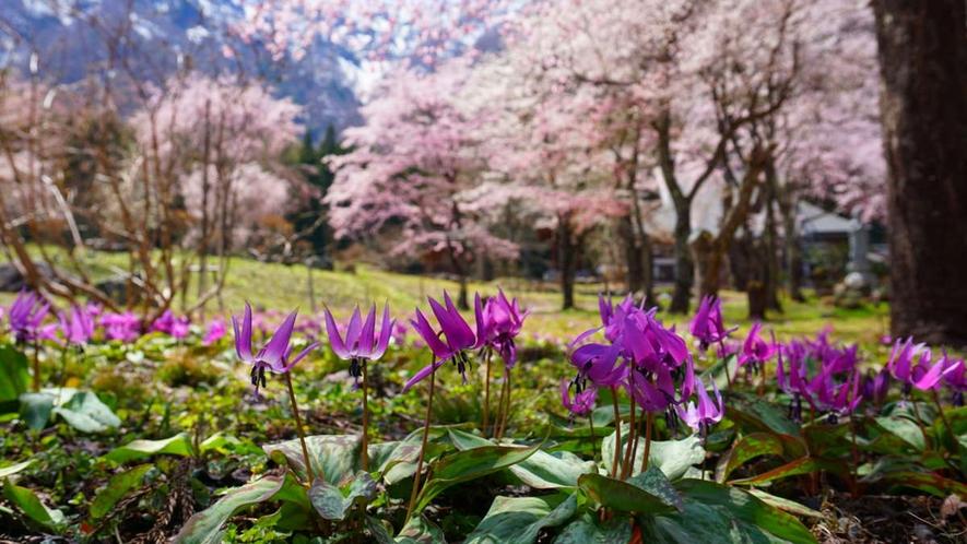 【春】「待っていたんだ」そんな声が聞こえて来そうな緑と花の季節が春。桜はGW頃・写真は貞麟寺 車12