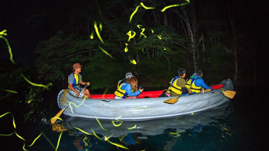 【湖上ホタルツアー】条件の良い日には非常にたくさんのホタルが湖畔に乱舞。