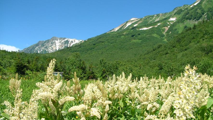 【栂池自然園】もっとも花の多い夏の時期。
