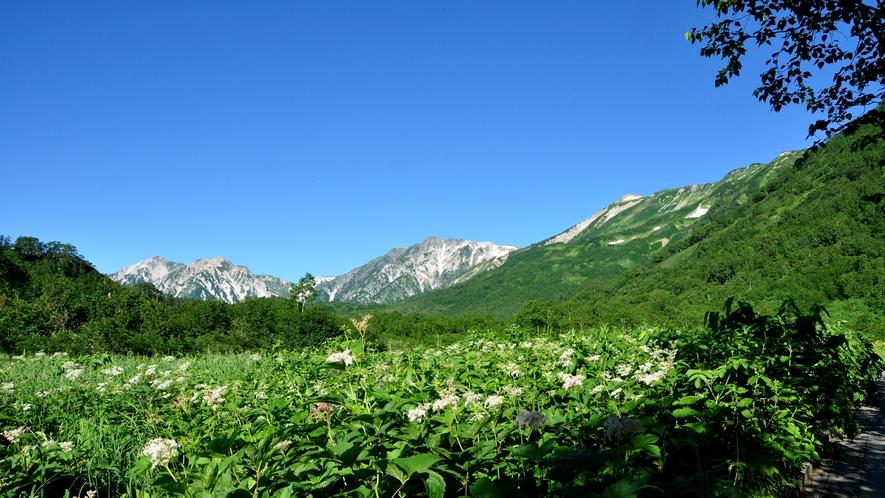 【栂池自然園】下界は残暑でも、雲上の自然園には別世界が広がる!
